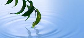 Meditazione Mindfulness