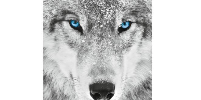 Trova il tuo animale di Potere. Meditazione Sciamanica