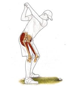 Golf e adduttori dell'anca