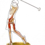 Ruolo dei muscoli posteriori della coscia nel golf